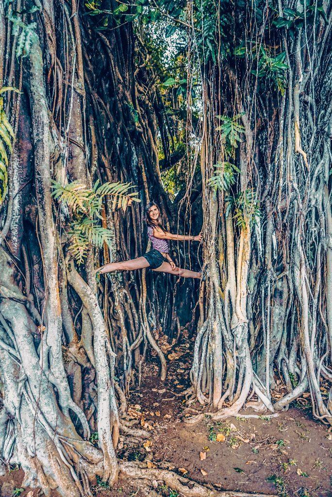 Oahu Banyan Tree