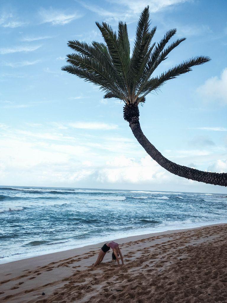 palm at sunset beach